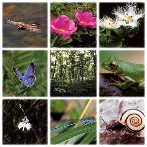动植物的顺势疗法启示