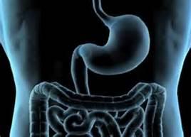 肠胃炎 (急性与慢性)