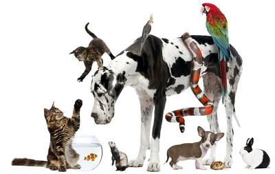 宠物与顺势疗法